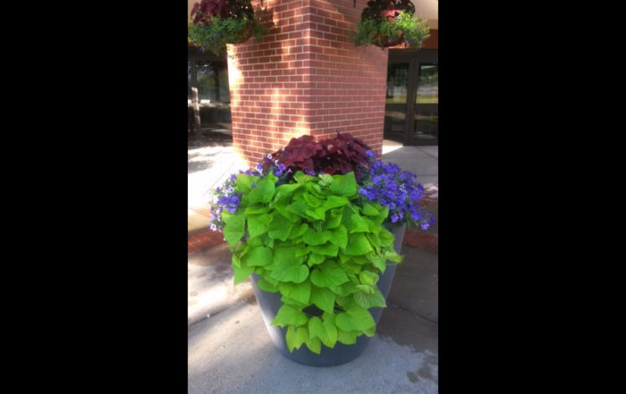 Westmoreland Comm College Commercial Self-Watering Planters