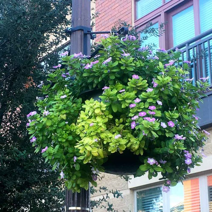 Commercial Hanging Basket Self Watering